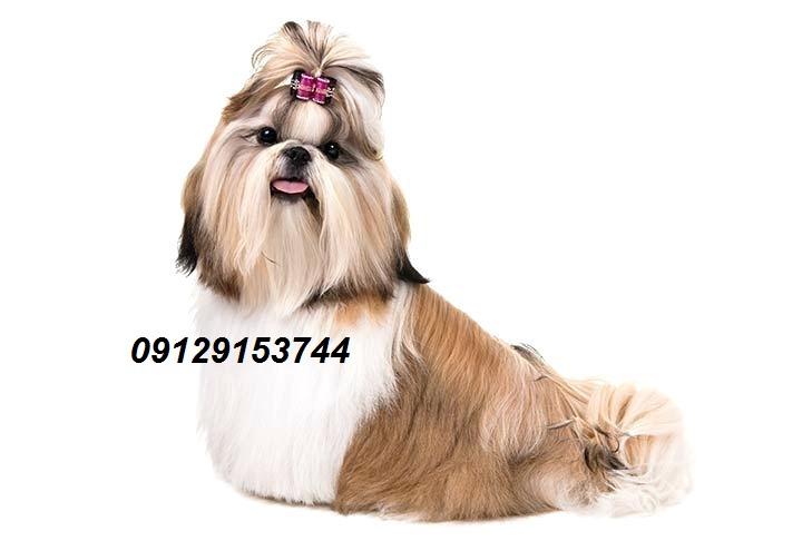 فروش سگ اپارتمانی